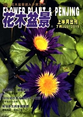 花木盆景杂志